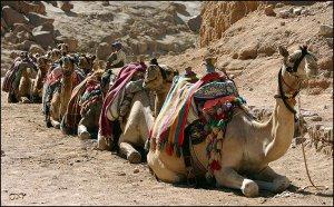 Не забудьте взять с собой в Египет!